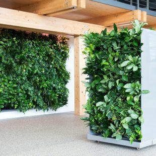 green walls groene wanden mos wanden