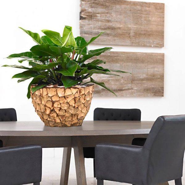interieur planten woerden