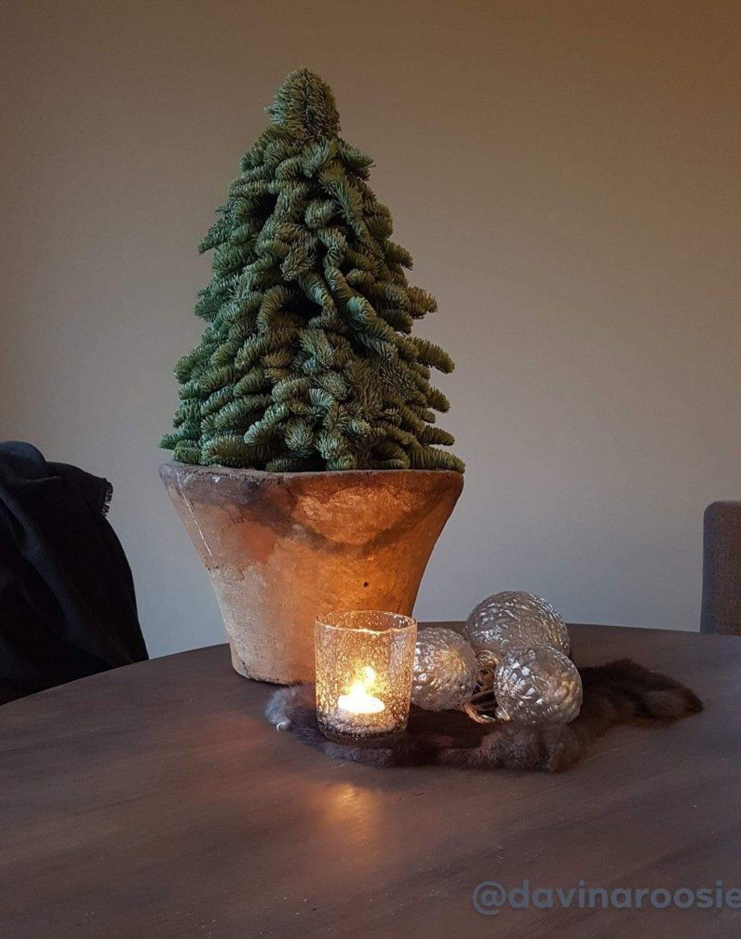 nobilis kerstboom