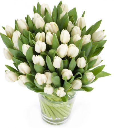 Tulpen bezorgen utrecht amsterdam, woerden, Harmelen