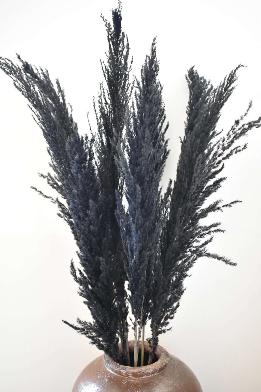 Zwarte pampas pluimen bestellen online