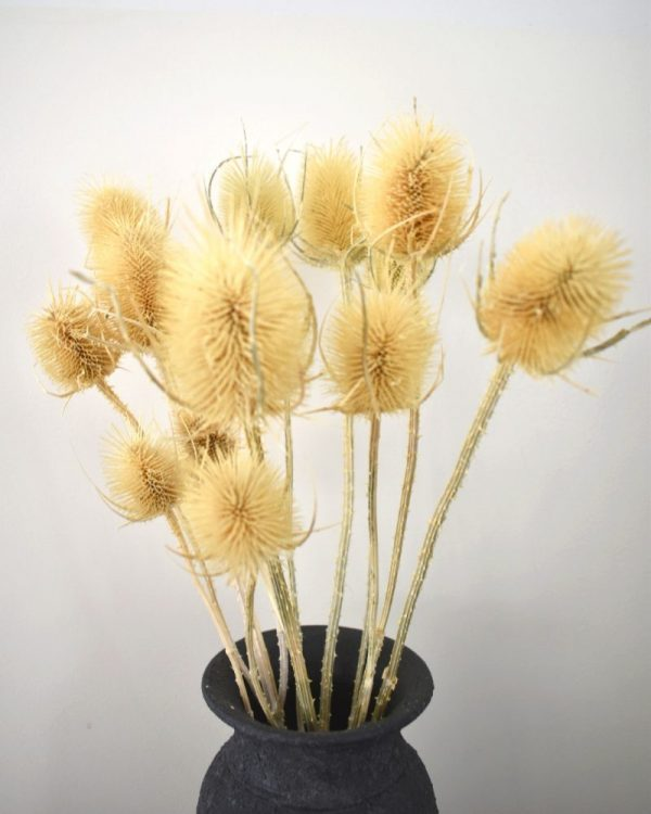 losse droogbloemen bestellen, kaardebol