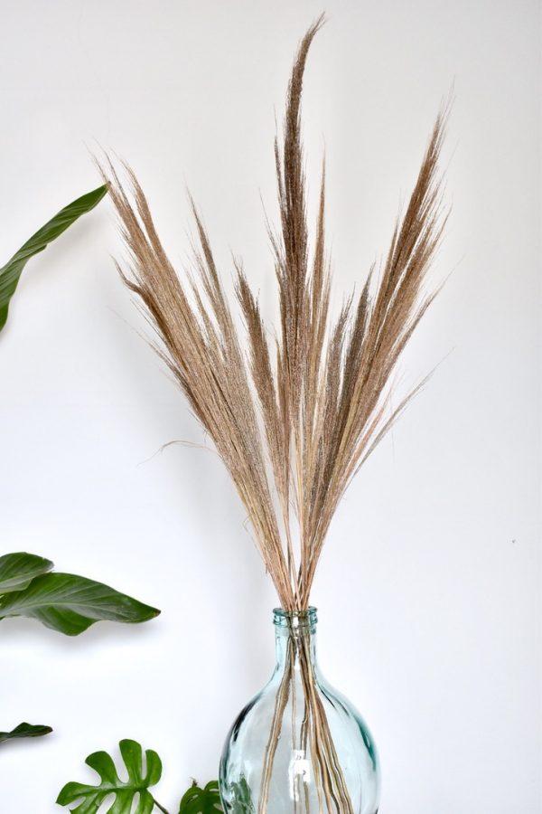 pampas grassen bestellen gratis bezorgen