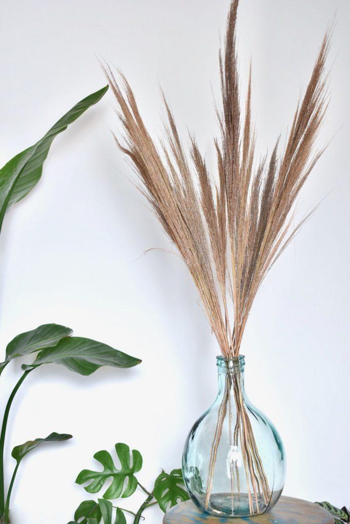 Droog (pampas)grassen