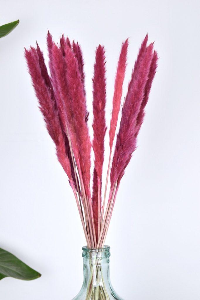 roze kleine pampas pluimen bos