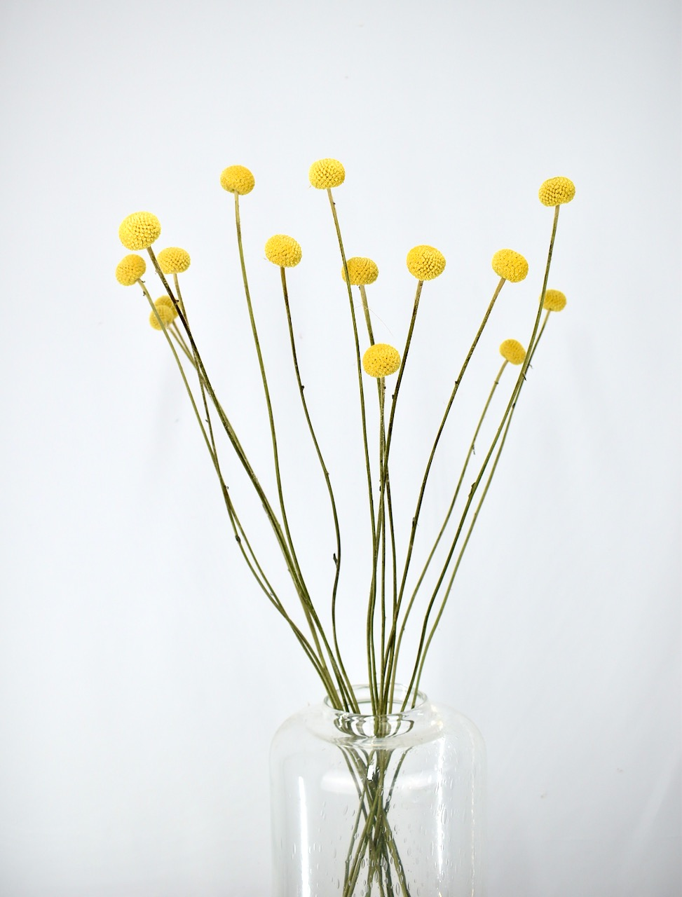losse droogbloemen bestellen