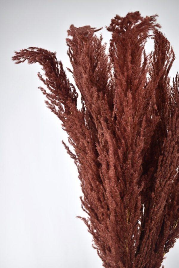 pampas pluimen in het donker rood