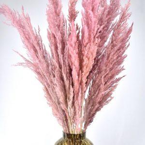 Pampas pluimen roze