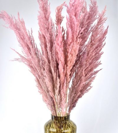 roze pampas pluimen bestellen