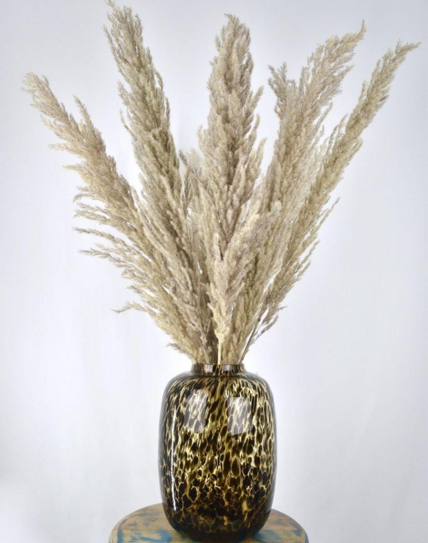 droogbloemen vaas met pampas pluimen cheetah
