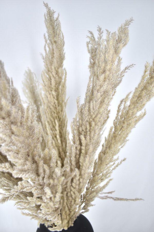 pampas pluimen bestellen naturel kleur