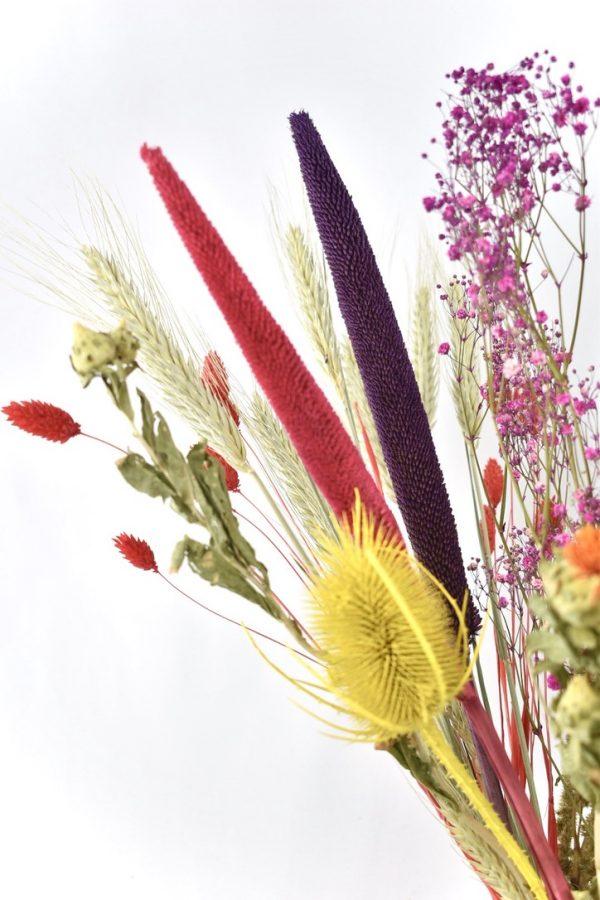 gekleurde bloemen droogbloem