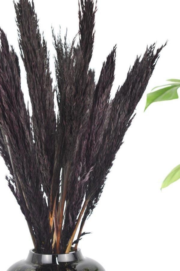 pampas in het zwart bestellen