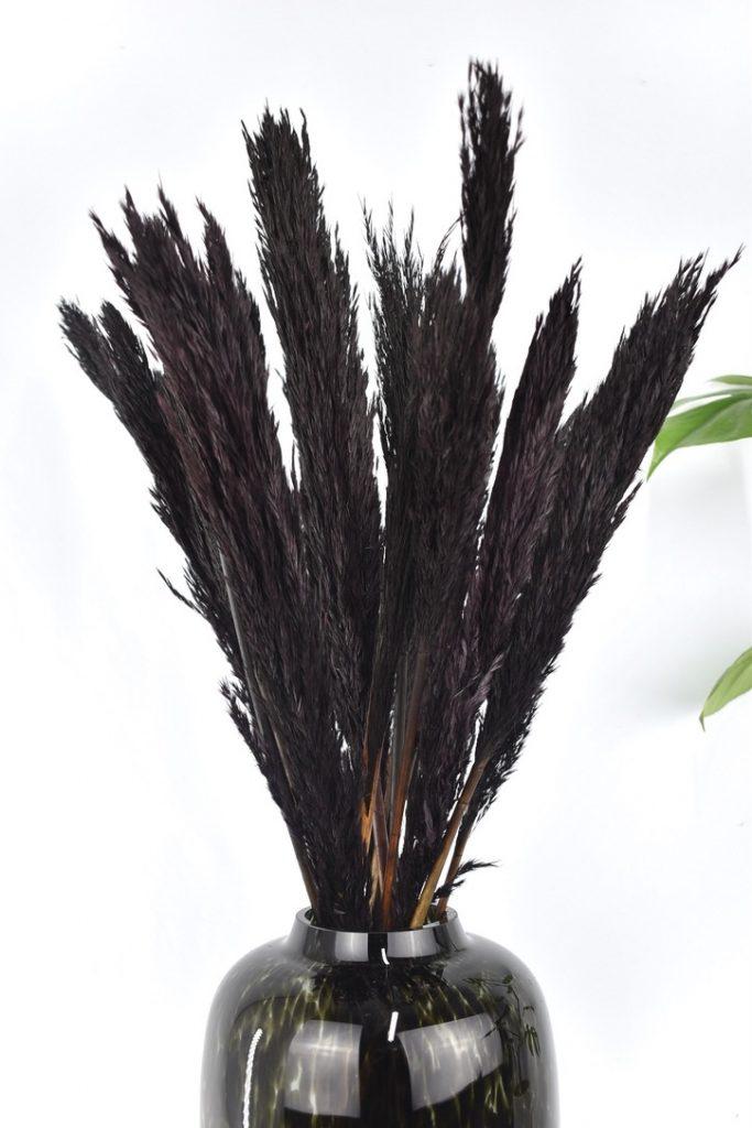 zwarte pampas pluimen bestellen
